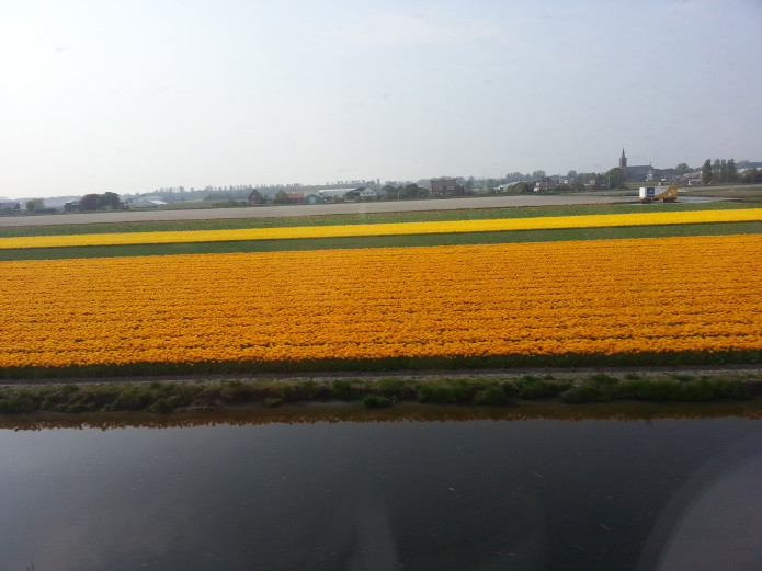 vibrant yellow flower landscape.jpg