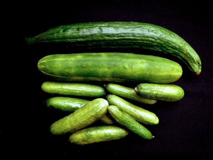 Kirby komkommers, cucumbers variety
